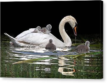 Nestled With Love Canvas Print - Watching And Learning by Gill Billington