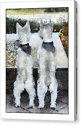 Watching And Waiting 2 Canvas Print