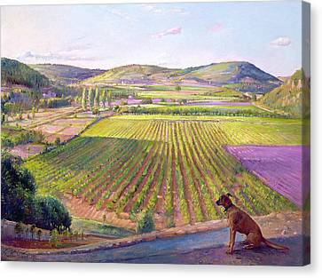 Plowed Fields Canvas Print - Watching From The Walls Old Provence by Timothy  Easton
