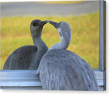 Watching Himself Canvas Print by Zina Stromberg