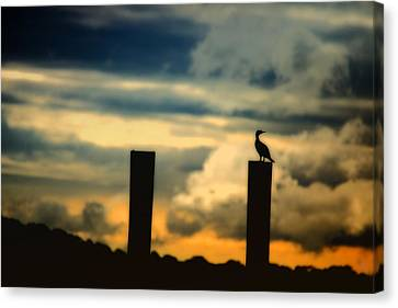 Watching The Sunrise Canvas Print by Karol Livote