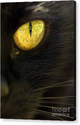 Watching You Canvas Print by Anne Gilbert