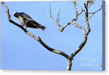 Canvas Print featuring the photograph Watching You Like A Hawk by Ecinja Art Works