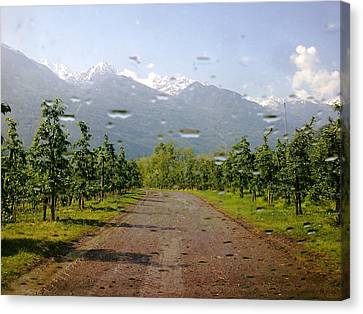 Water And Apple Juice Canvas Print by Giuseppe Epifani