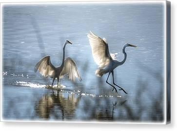 Water Ballet  Canvas Print by Saija  Lehtonen
