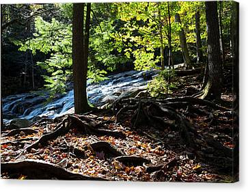 Water Cascades Down A Forested Slope Canvas Print