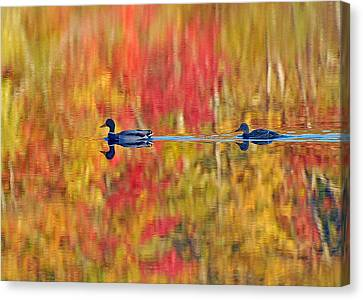 Water Colors Canvas Print by Stephen Flint