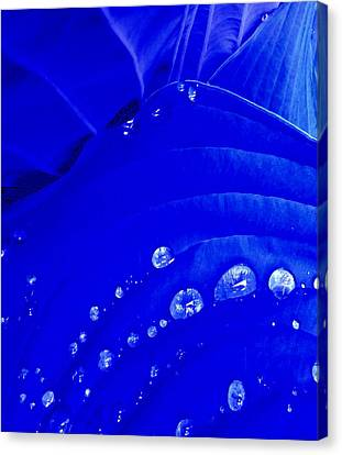 Water Droplets  Canvas Print by Carolyn Repka