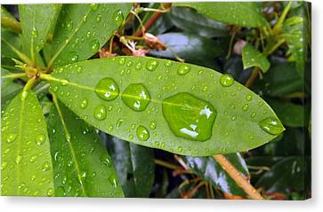 Water Droplets On Leaf Canvas Print by Joyce  Wasser
