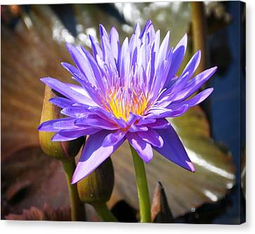 Canvas Print - Water Flower 1004d by Marty Koch