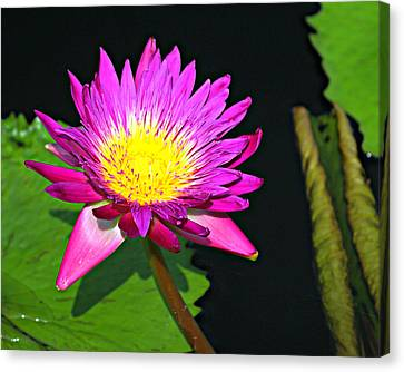 Canvas Print - Water Flower 10089 by Marty Koch