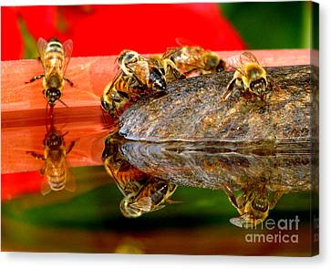 Water For Honey Bees 2 Canvas Print