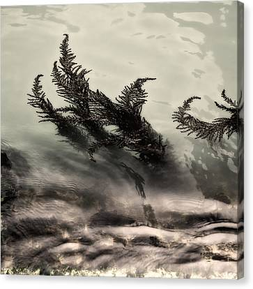 Water Fronds Canvas Print by Dave Bowman