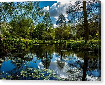 Water Garden Canvas Print by Martin Newman