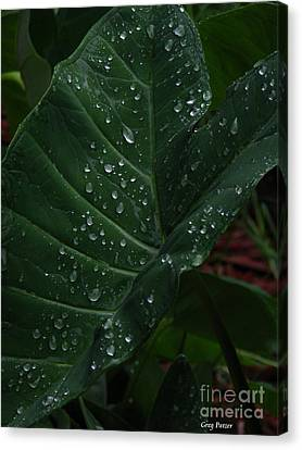 Water In My Ear Canvas Print by Greg Patzer