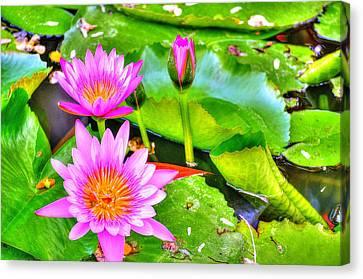 Water Lilies 2 Canvas Print by Richard Zentner