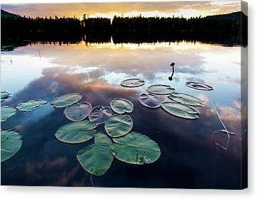 Water Lilies And Cloud Reflections Canvas Print by Jerry and Marcy Monkman