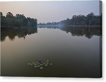 Water Lilies At Dawn Canvas Print by Bill Mock