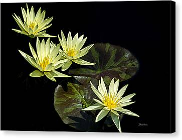 Water Lilies In Yellow Canvas Print
