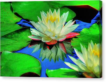 Water Lilly Canvas Print by Ed Roberts