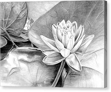 Water Lilly Canvas Print by Laurianna Taylor
