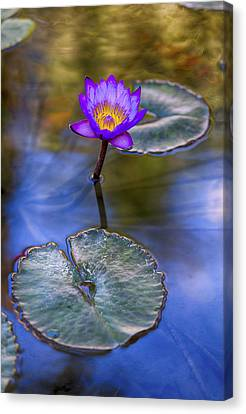 Depth Of Field Canvas Print - Water Lily 4 by Scott Campbell