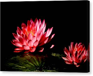 Water Lily 5 Canvas Print