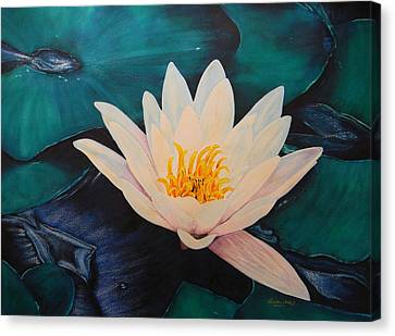 Water Lily Canvas Print by Adel Nemeth