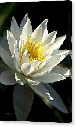 Water Lily Canvas Print by Christina Rollo