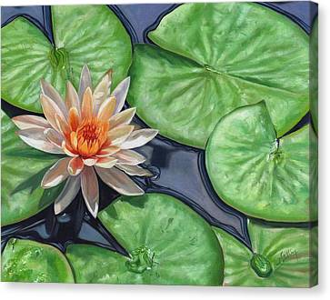 Water Lily Canvas Print by David Stribbling