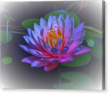 Canvas Print - Water Lily by Debra Madonna
