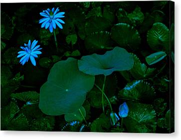 Canvas Print - Water Lily by Donald Chen