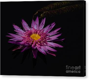 Water Lily I Canvas Print by Ursula Lawrence