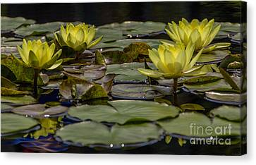 Water Lily II Canvas Print by Ursula Lawrence