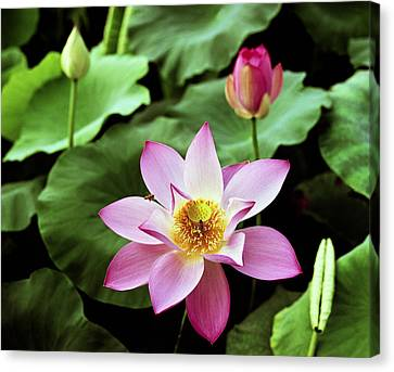 Exoticism Canvas Print - Water-lily by King Wu