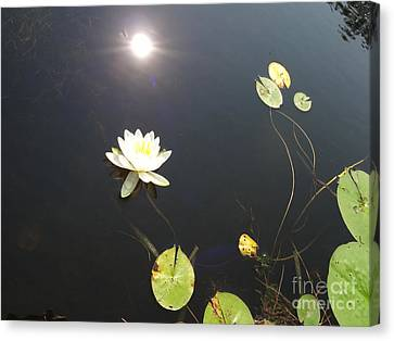Water Lily Canvas Print by Laurel Best
