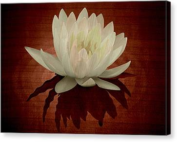 Painted Details Canvas Print - Water Lily Marquetry by Zsolt Sesztak