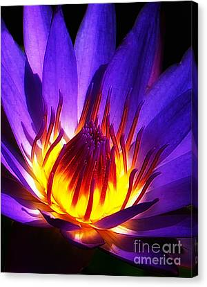Water Lily Canvas Print by Mike Nellums
