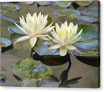 Water Lily Pair Canvas Print by Richard Bryce and Family