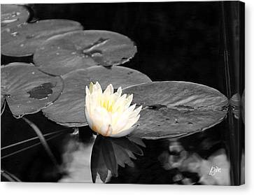 Canvas Print featuring the photograph Water Lily by Phil Mancuso