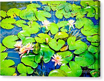 Water Lily Pond Canvas Print by Colleen Kammerer