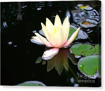Water Lily Reflection  Canvas Print