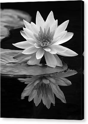 Water Lily Reflections I Canvas Print by Dawn Currie