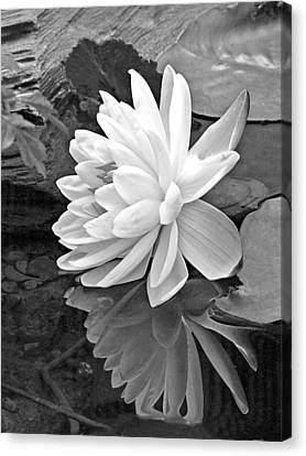 Water Lily Reflections In Black And White Canvas Print