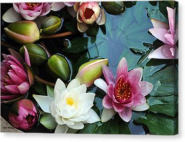 Canvas Print featuring the photograph Water Lily Series 1 by Haleh Mahbod