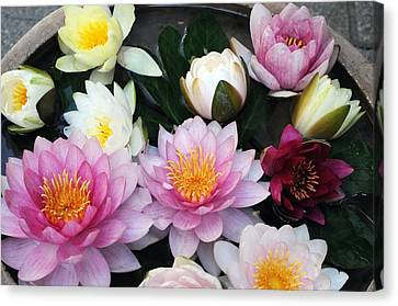 Canvas Print featuring the photograph Water Lily Series -2  by Haleh Mahbod