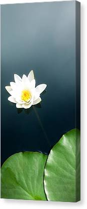 Water Lily Study 2 Canvas Print by Ron Regalado