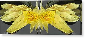 Water Lily Unleashed 4 Canvas Print by Tim Allen
