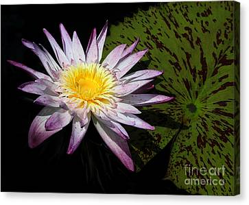 Florida Flowers Canvas Print - Water Lily With Lots Of Petals by Sabrina L Ryan