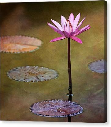 Water Lily Wonderland Canvas Print